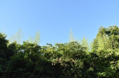 18_7_22_ohara2.jpg