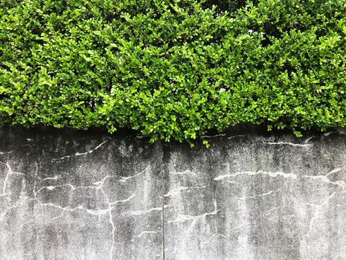 19_6_22_green2.jpg